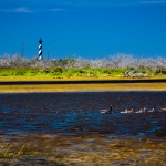 Cape Hateras Light and Geese @ Cape Hateras, NC