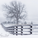 Snow Storm Fence and Oak @ Waukesha, WI